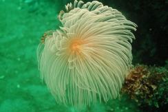 La biodiversité sous les pontons